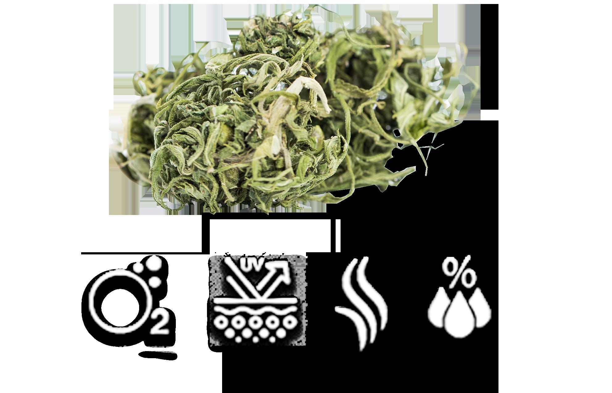 vQm - Hemp / Cannabis